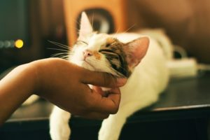 Pain for Declawed Cat