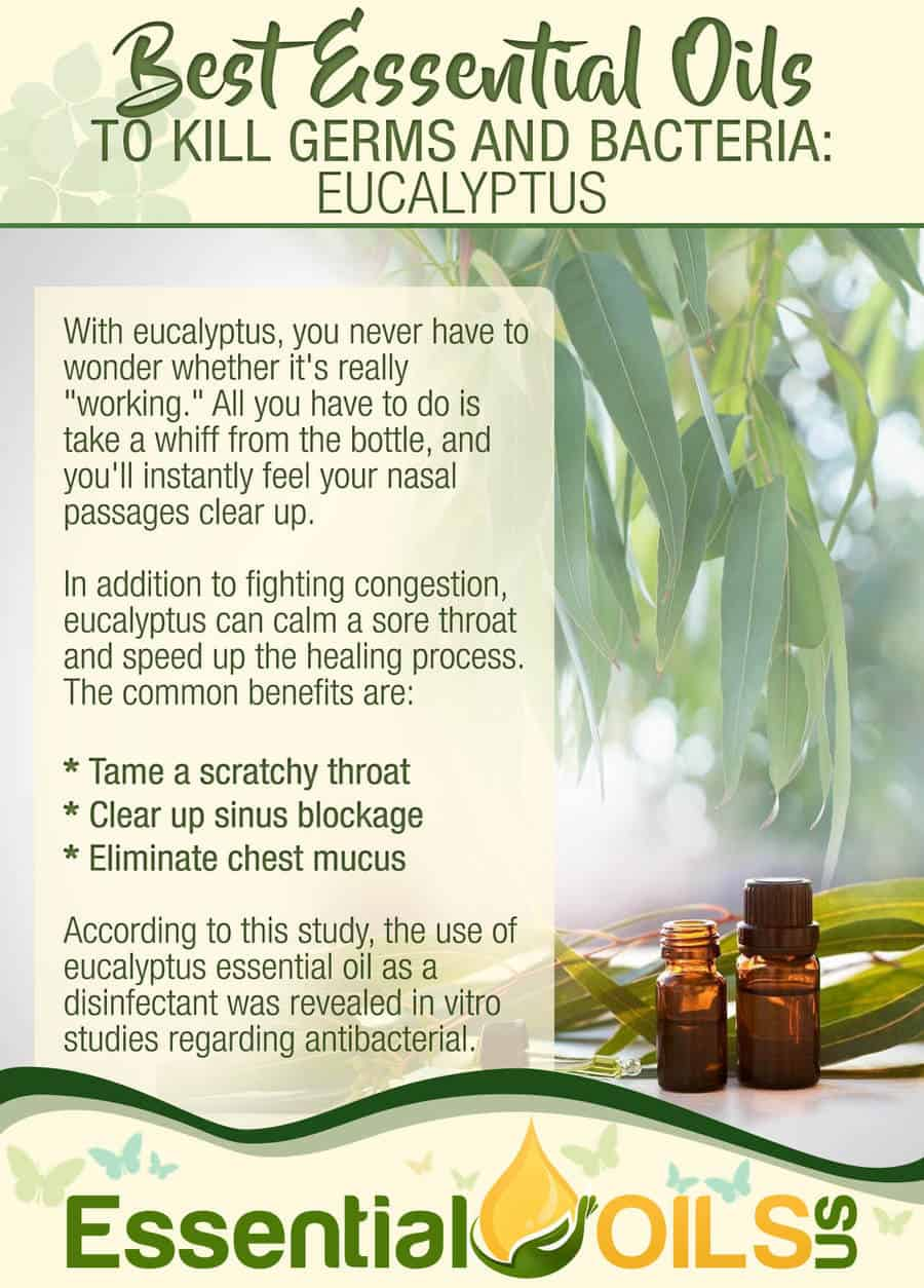 Essential Oils For Germs And Bacteria - Eucalyptus