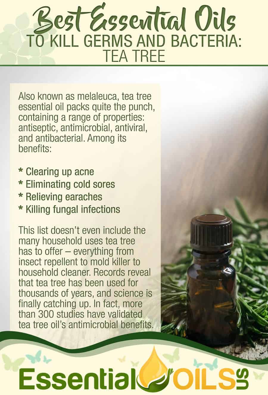Essential Oils For Germs And Bacteria - Tea Tree