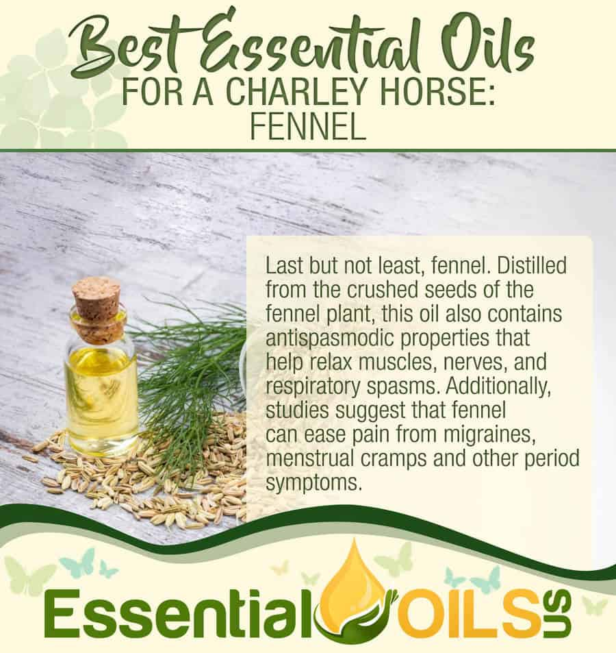 Essential Oils For Charley Horses - Fennel