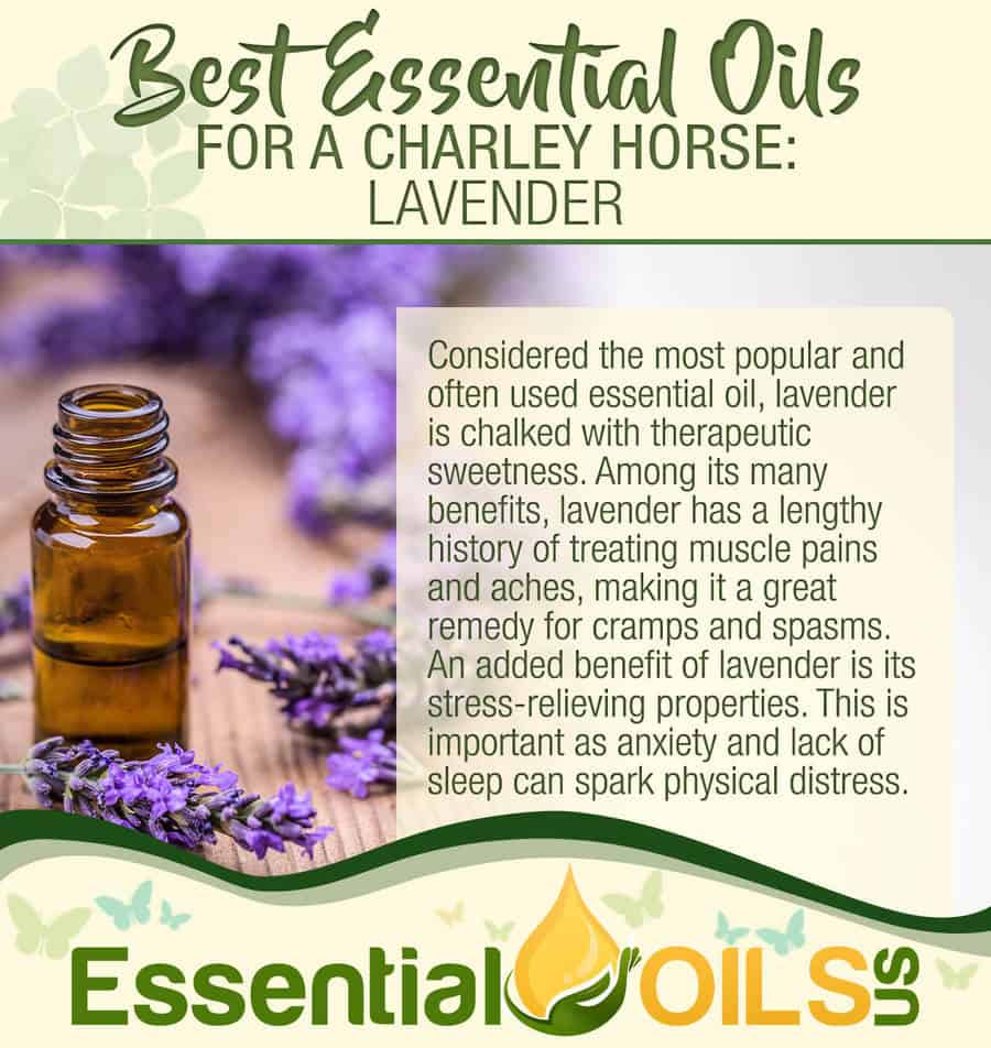 Essential Oils For Charley Horses - Lavender