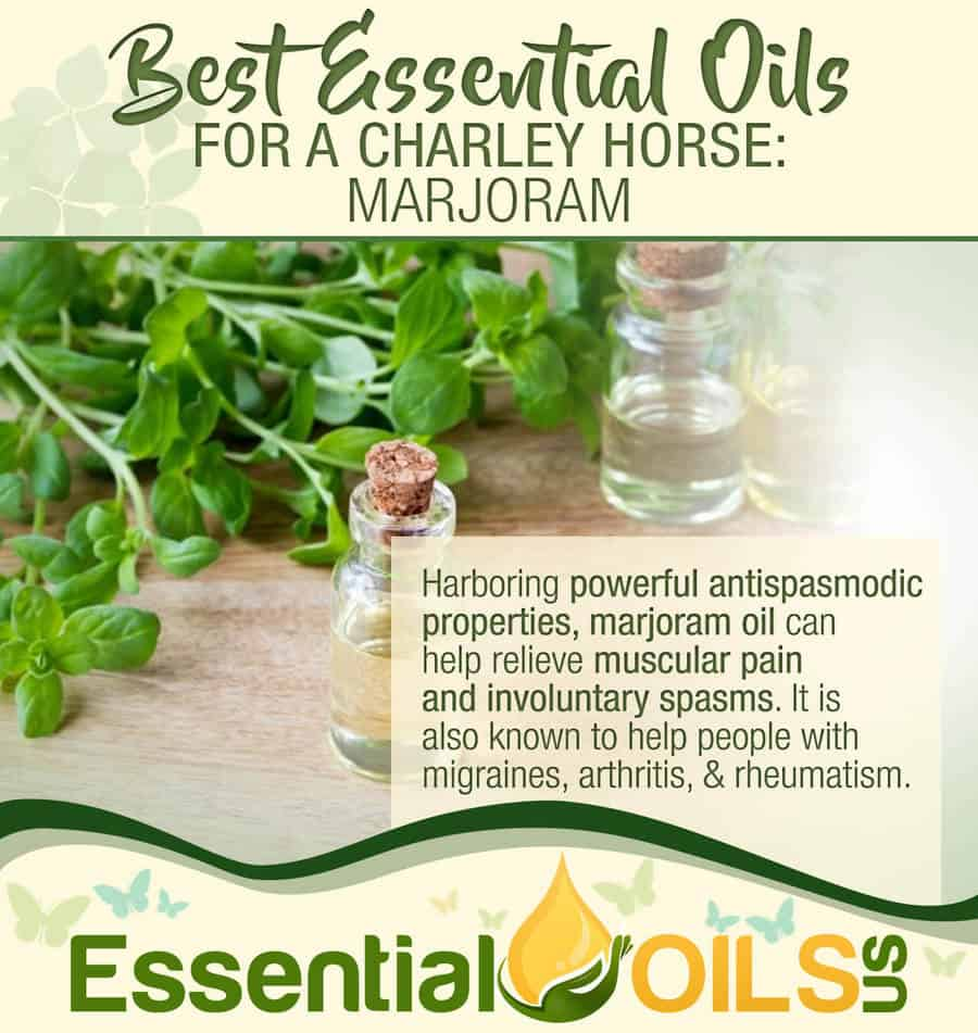 Essential Oils For Charley Horses - Marjoram